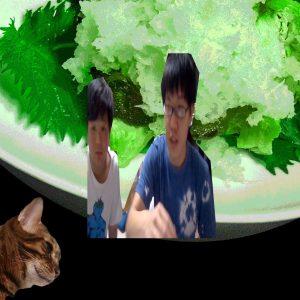 猫と異次元のサムネ